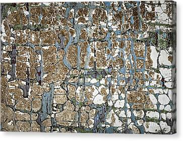 Old Painted Wood Abstract No.5 Canvas Print