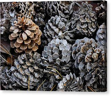 Old Pinecones Canvas Print by Kae Cheatham