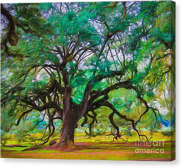 Old Plantation Oak Canvas Print by Perry Webster