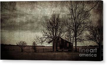 Old Plantation Canvas Print by Perry Webster