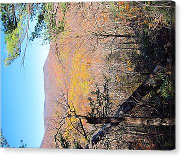 Old Rag Hiking Trail - 121215 Canvas Print by DC Photographer