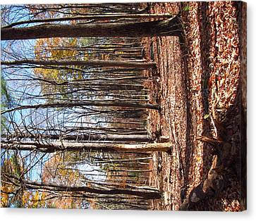 Old Rag Hiking Trail - 12122 Canvas Print