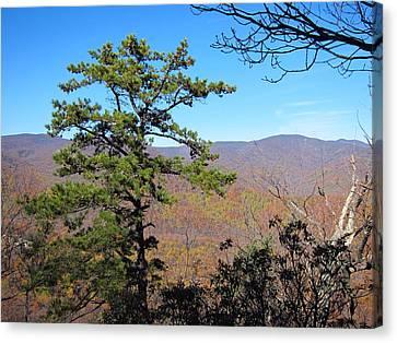 Old Rag Hiking Trail - 121221 Canvas Print
