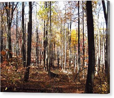 Old Rag Hiking Trail - 12124 Canvas Print