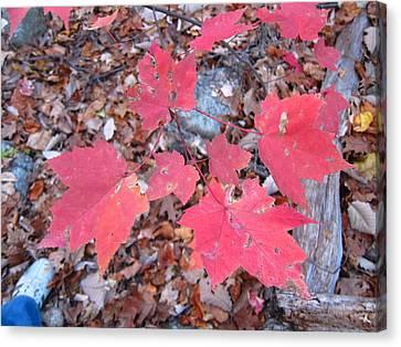 Old Rag Hiking Trail - 121260 Canvas Print