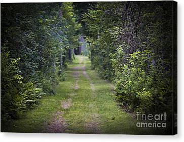 Old Road Through Forest Canvas Print by Elena Elisseeva