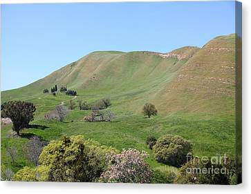 Old Rose Hill Cemetery Atop The Rolling Hills Landscape Of The Black Diamond Mines California 5d2232 Canvas Print by Wingsdomain Art and Photography