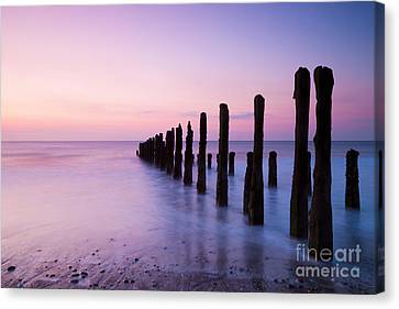 Old Sea Defence Posts At Sunrise Canvas Print by Colin and Linda McKie