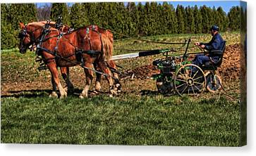 Plow Horse Canvas Print - Old Time Horse Plowing by Dan Sproul