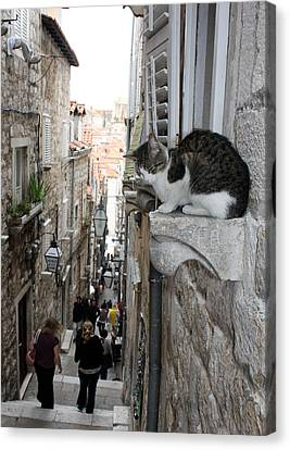 Old Town Alley Cat Canvas Print by David Nicholls