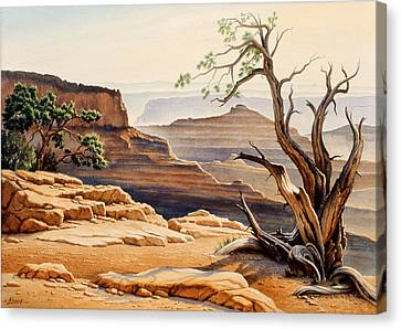 Old Tree At The Canyon Canvas Print