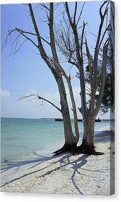 Canvas Print featuring the photograph Old Tree by Laurie Perry