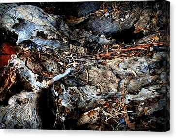 Old Tree Number 1 Canvas Print by Peter Cutler