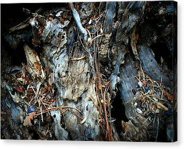 Old Tree Number 2 Canvas Print by Peter Cutler