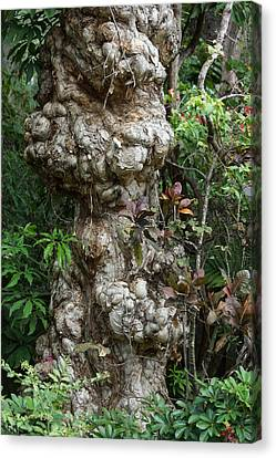 Canvas Print featuring the mixed media Old Tree by Rafael Salazar