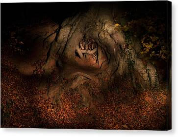 Old Tree Roots Paxton House Grounds. Canvas Print by Niall McWilliam