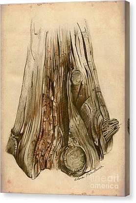 Old Tree Stump - Sketch Chalk Charcoal Sepia - Elena Yakubovich Canvas Print