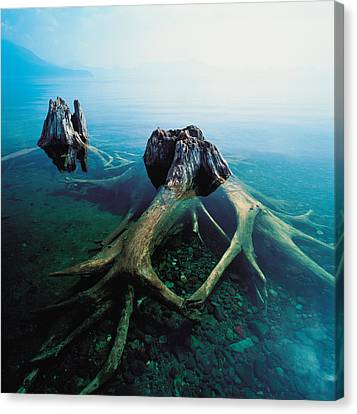 Old Tree Trunks Underwater Canvas Print