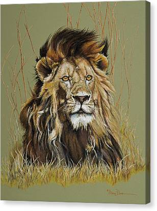 Old Warrior African Lion Canvas Print