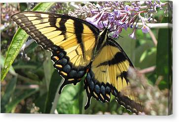 Canvas Print featuring the photograph Old World Swallowtail by Jennifer Wheatley Wolf