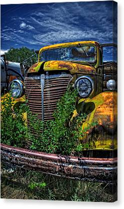 Canvas Print featuring the photograph Old Yeller by Ken Smith