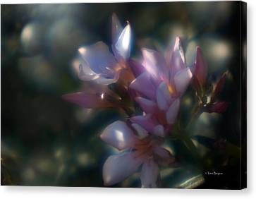 Oleander 2 Canvas Print by Travis Burgess