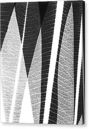 Oleander Leaves Canvas Print by Albert Koetsier X-ray