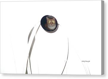 Canvas Print featuring the photograph Olga Cat Reflected In Drawer Knob by Kathy Barney