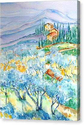 Olive Groves Of Cozille Tuscany  Canvas Print by Trudi Doyle