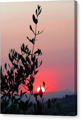Olive Tree At Sunset Canvas Print by Dorothy Berry-Lound
