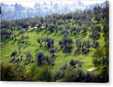 Olive Trees And Shadows Canvas Print by Debi Demetrion