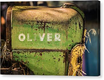 Oliver Canvas Print by Steve Smith