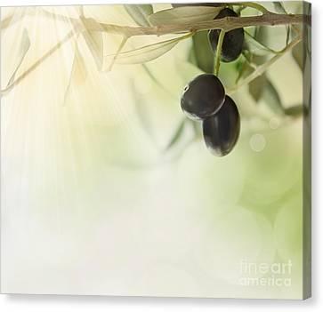 Olives Design Background Canvas Print by Mythja  Photography