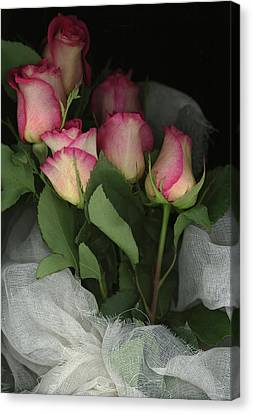 Ombre Tea Rose On Black Background Canvas Print by Anna Miller
