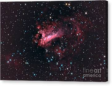 Omega Nebula M17 Canvas Print by John Chumack