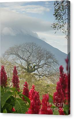 Canvas Print featuring the photograph Ometepe Island 1 by Rudi Prott