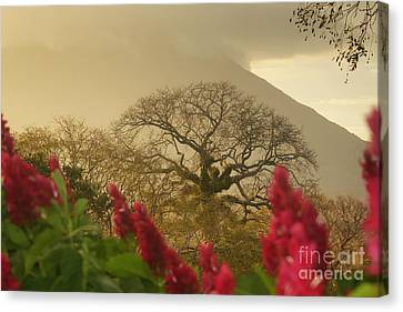 Canvas Print featuring the photograph Ometepe Island 2 by Rudi Prott