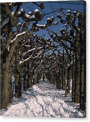 On A Cold Winter Day Canvas Print by Angela Bruno