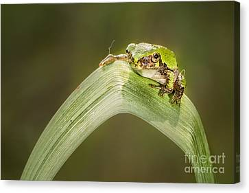 On A Leaf Canvas Print by Timothy Hacker