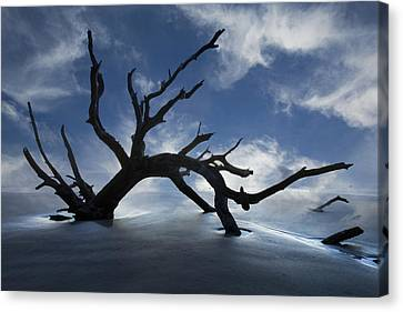 On A Misty Morning Canvas Print by Debra and Dave Vanderlaan