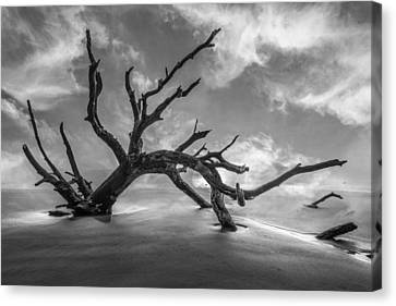 On A Misty Morning In Black And White Canvas Print by Debra and Dave Vanderlaan
