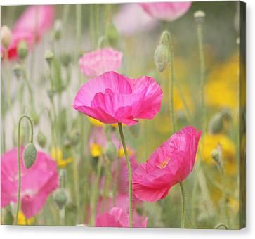 On A Summer Day - Pink Poppy Canvas Print by Kim Hojnacki