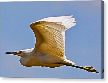On Angel's Wings Canvas Print by Gary Holmes