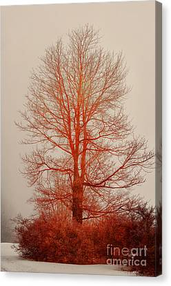 On Fire In The Fog Canvas Print