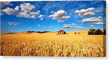 On Golden Fields Canvas Print by Bill  Robinson