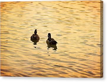 On Golden Pond Ducks Canvas Print by Angela A Stanton