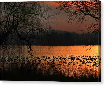 On Golden Pond Canvas Print by Lori Deiter