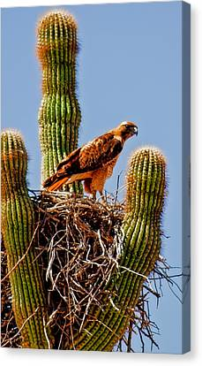 On Guard Canvas Print by Robert Bales
