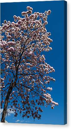 On Sping Canvas Print by Mario Morales Rubi
