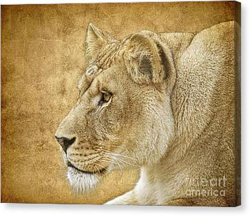 Lion Canvas Print - On Target by Steve McKinzie